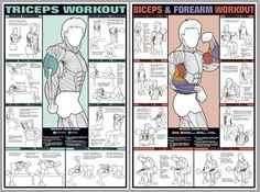 Arm Workout Instructional 2-Poster Professional Fitness Wall Chart Combo - Fitnus Corp.