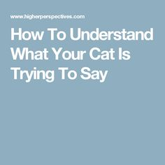 How To Understand What Your Cat Is Trying To Say