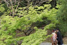 京都の和装前撮り、結婚フォト/春のロケーションウェディング。