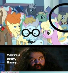 Harry Potter and MLP. Jessica will shit when she see's this.