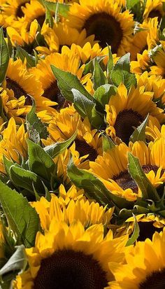 Sunflowers are such strong, cheerful flowers!