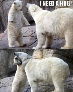 Polar bears need hugs too.