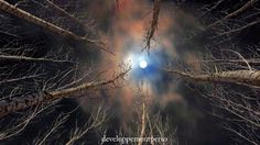 Forest and Moon by babis mavrommatis on Enchanted, Om Mantra, Solfeggio Frequencies, Sun And Stars, Daily Meditation, Creative Pictures, Star Sky, Dark Night, New Age
