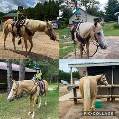 Whiskey is a 2002 grade QH palomino gelding. 15.1hh. Very nice build. Extremely sweet personality. He loves people and attention. He has been owned by same owner since a 4 yr old. Trained in WP prior to her buying him. Then her son used him in drill team, some fun shows, parades and trailRiding. Western Riding, Trail Riding, Quarter Horses For Sale, American Quarter Horse, Horse Training, Palomino, Train Rides, Love People, Wisconsin