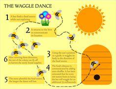 bee dance - Google Search