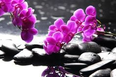 Branch Purple Orchid Flower With Therapy Stones Photographic Print by crystalfoto at Art.com