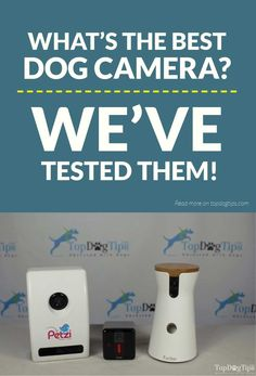 Best Dog Camera Comparison Petzi vs Petcube vs Furbo The best dog camera certainly isnt a necessity for pet owners but they are very handy to have if you worry about your. Dog Training Tools, Dog Training Techniques, Camera Comparison, Build A Dog House, Pet Camera, Cool Dog Houses, Pet Life, Diy Stuffed Animals, Dog Supplies