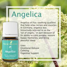 Angelica oil has soothing qualities that help relax nerves and muscles.