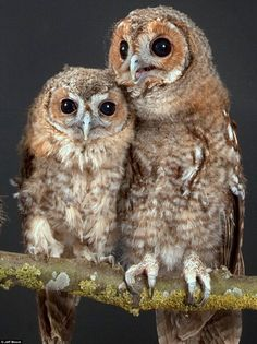 Happy Owls! Pinned by www.myowlbarn.com