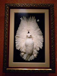 stuffed owl    Cantor Museum, Stanford University  Palo Alto, CA