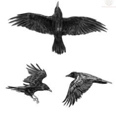 """#Blackbirds #Crow #Raven #BirdTotem #SpiritAnimal #art #inspiration #Tattoos    The Cherokee call Crow Medicine """"koga nvwato"""". The power to shape-shift means they can be in two places at one time."""