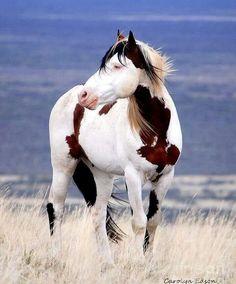 Beautiful Paint Horse!