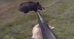 This incredible collection of slow motion hog shots is virtually guaranteed to have you on the edge of your seat as you watch them.
