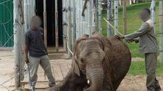 Close #Elephants of Eden Park because of animal cruelty. #PETITION  #animalcruelty #animalwelfare