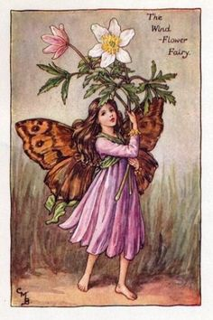 Wind-Flower Flower Fairy Vintage Print by Cicely Mary Barker. first published in London by Blackie, 1923 in Flower Fairies of the Spring. Also called Anemones.