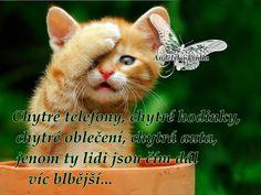 Type 1, Kultura, Humor, Cats, Animals, Facebook, Photos, Gatos, Animales