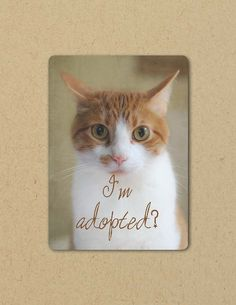 Photo Greeting  Card I'M ADOPTED CAT Eco by FarmFreshPhotography, $4.25