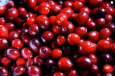 Wisconsin State Fruit - Cranberry