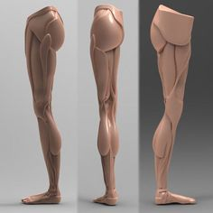 Human Leg Anatomy [Combo Pack] Model available on Turbo Squid, the world's leading provider of digital models for visualization, films, television, and games. Leg Anatomy, Anatomy Poses, Anatomy Study, Anatomy Drawing, Human Anatomy, Anatomy Art, Zbrush, Leg Reference, Anatomy Reference