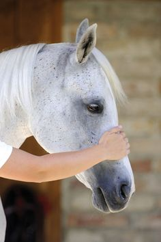 I happened to be at the barn one day to visit another horse, when I walked by a stall and was shocked by a distraught ...