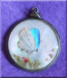 Gorgeous REAL BUTTERFLY Antique Victorian Sterling PENDANT or Fob  $28