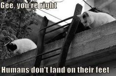 """""""Gee, you're right; humans don't land on their feet!"""" Funny Fotos for Facebook, Funny Facebook Signs, Facebook Memes"""