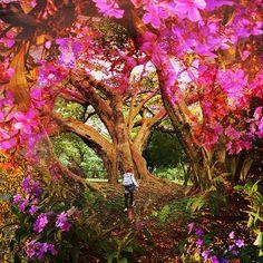Flora | por jeronimoooooooo