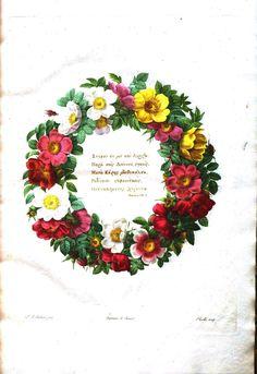 Botanical - Flower - Les Roses 1