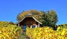 https://flic.kr/p/CwVjGU   La cabane dans les vignes  