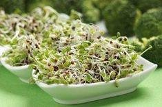 Growing Broccoli Sprouts...Sue 2013