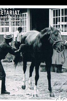 Secretariat and Eddie Sweat, his beloved Groom