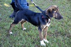 3 / 23     Petango.com – Meet Dixie, a 8 months Beagle / Mix available for adoption in MADISON, FL Contact Information Address  1156 SE Bisbee Loop, MADISON, FL, 32340  Phone  (850) 971-9904  Website  http://www.suwanneevalleyhuman esociety.org  Email  suwanneevalley@embarqmail.com