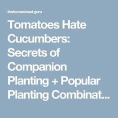 Tomatoes Hate Cucumbers: Secrets of Companion Planting + Popular Planting Combinations | Homestead Guru