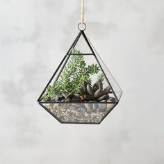 Framed Pyramid Hanging Terrarium (€36) ❤ liked on Polyvore featuring home, home decor, floral decor, clear, geometric terrariums and geometric home decor