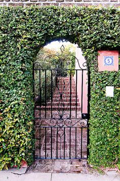 An ivy-covered gate in the city which is well-known for its beautiful architectures, gardens, gates, and fences | Charleston, SC