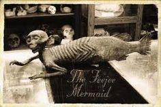 De Fiji Zeemeermin: een hoax van 1842