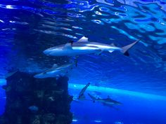 During our holiday in Dubai we were really looking forward to visiting the Dubai Aquarium and Underwater Zoo which is one of the world's biggest aquariums located in the biggest shopping mall in the world, the Dubai Mall. My younger daughter loves crocodiles and when I told her that one of the biggest crocodiles on…