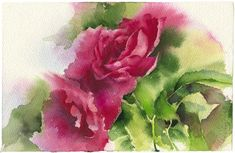 Watercolor rose painting  rose original painting print