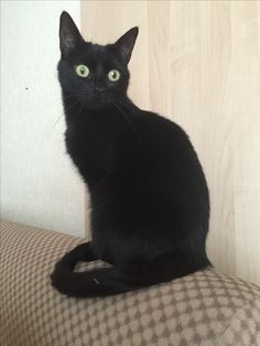 Femi Katze | Pawshake