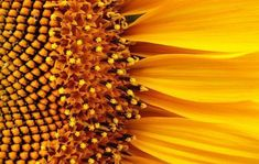 Capturing the perfect Flower Macro [For Beginners] - Digital Photography School ✖️More Pins Like This One At FOSTERGINGER @ Pinterest ✖️Fosterginger.Pinterest.Com.✖️No Pin Limits✖️ #digitalphotographyforbeginners