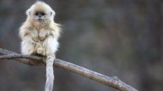 Die Mimik von Affen ist doch herrlich. Hier erwarten dich ein paar nette Beispiele.