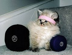 werkin' on muh fitness.