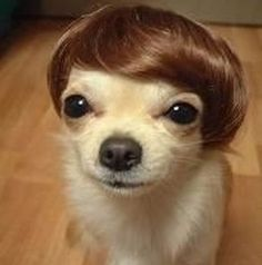 OMG....too cute!!! Wigs for dogs!