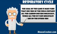 http://mousecrusher.com/respiratory-cycle-game Respiratory Cycle game