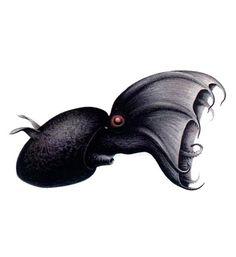 weird sea creatures, ocean mysteries, marine life, sea animals, Vampire Squid