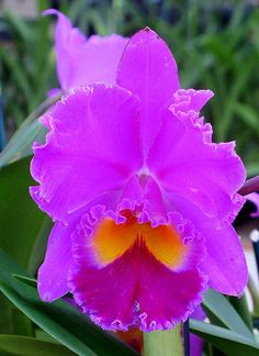 ORCHID GROWERS  THE BIG ISLAND (VOLCANO AREA) by vermillion$baby, via Flickr