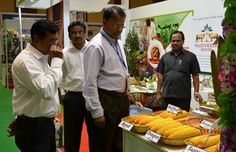Nuziveedu Seeds participated in the recently held World Agriculture Forum (WAF) in Hyderabad between November 4-7, 2013. We displayed our products at the stall for the visitors of WAF