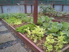 Website - Desde Mi Huerto (Finca Agroecológica en Patillas, PR)