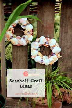 Image result for the shell collector BethWiseman.com