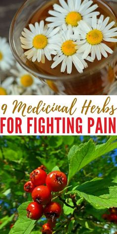 9 Medicinal Herbs For Fighting Pain - Another thing that's good about medicinal herbs is that you may have some of them growing on your property right now! Once you learn how to identify them, you'll be able to pick them whenever you want, as well as pick as much as you want.